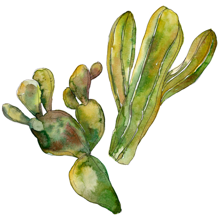 Green cactus floral botanical flower. Wild spring leaf wildflower isolated. Watercolor background illustration set. Watercolour drawing fashion aquarelle. Isolated cacti illustration element. Imagens