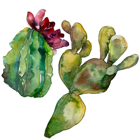Green cactus floral botanical flower. Wild spring leaf wildflower isolated. Watercolor background illustration set. Watercolour drawing fashion aquarelle. Isolated cacti illustration element. Фото со стока