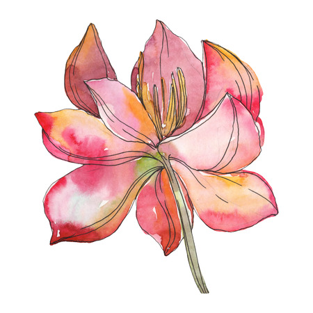Pink lotus foral botanical flower. Wild spring leaf wildflower isolated. Watercolor background illustration set. Watercolour drawing fashion aquarelle. Isolated lotus illustration element. Stock Photo