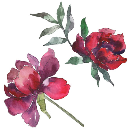 Burgundy peony floral botanical flower. Wild spring leaf wildflower isolated. Watercolor background set. Watercolour drawing fashion aquarelle. Isolated peony illustration element.