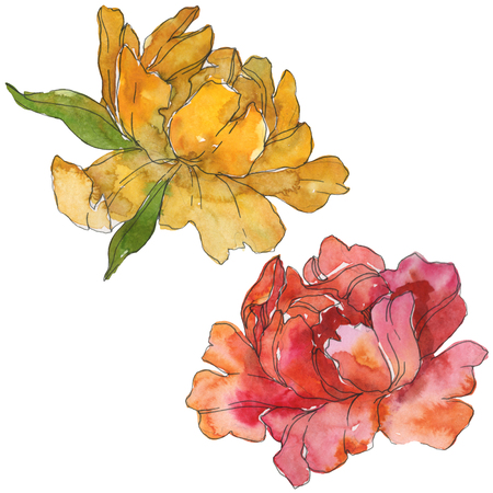 Yellow and red peony floral botanical flower. Wild spring leaf wildflower isolated. Watercolor background illustration set. Watercolour drawing fashion aquarelle. Isolated peony illustration element.