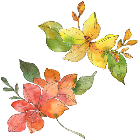 Red and yellow tropical floral botanical flowers. Wild spring leaf wildflower. Watercolor background illustration set. Watercolour drawing fashion aquarelle. Isolated flower illustration element.