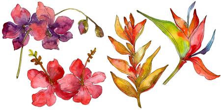 loral botanical flower. Wild spring leaf wildflower isolated. Watercolor background illustration set. Watercolour drawing fashion aquarelle isolated.
