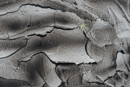young green plant on dried cracked wasteland surface, global warming concept 写真素材