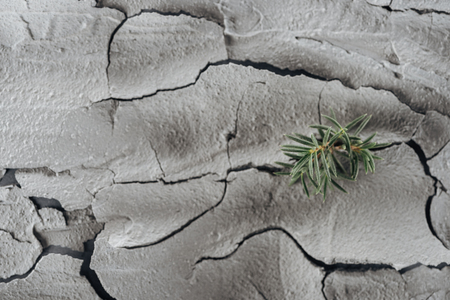 young green plants on cracked land surface, global warming concept