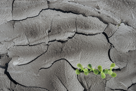 young green plants on dry cracked surface, global warming concept
