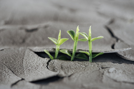 selective focus of young green plants on dried cracked ground, global warming concept 写真素材
