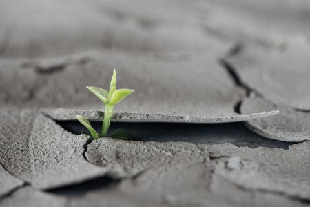 El enfoque selectivo de la planta verde joven en la superficie del suelo agrietado, concepto de calentamiento global Foto de archivo