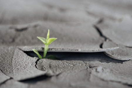 selective focus of young green plant on cracked ground surface, global warming concept 免版税图像