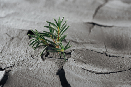 selective focus of young green plants on barren ground surface, global warming concept