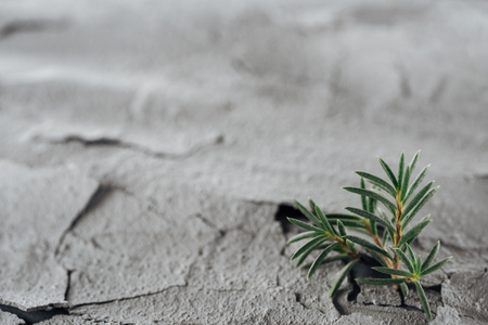 selective focus of young green plants on dried cracked land surface, global warming concept Stockfoto