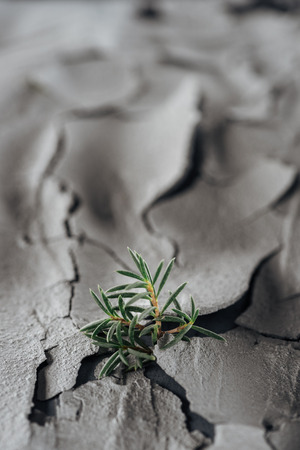 selective focus of young green plants on rough cracked ground surface, global warming concept
