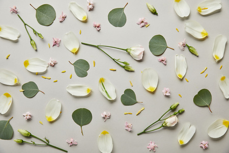 top view of tulip petals, leaves and buds isolated on grey Banco de Imagens