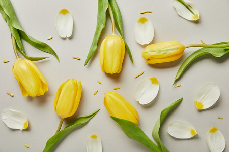 top view of petals and yellow tulips isolated on white