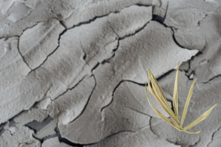 selective focus of dry plant on barren surface, global warming concept Stok Fotoğraf