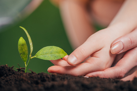 selective focus of woman and kid hands near young green plant growing in ground on blurred background, earth day concept Stock fotó