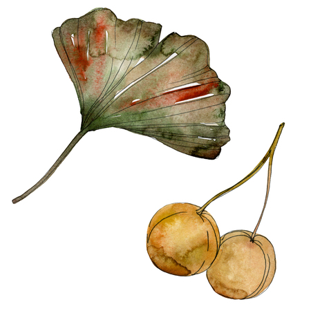 Green red ginkgo biloba leaves. Leaf plant botanical garden floral foliage. Watercolor background illustration set. Watercolour drawing fashion aquarelle. Isolated gingko illustration element. Reklamní fotografie