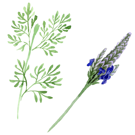 Blue violet lavender floral botanical flower. Wild spring leaf wildflower isolated. Watercolor background set. Watercolour drawing fashion aquarelle. Isolated lavandula illustration element.