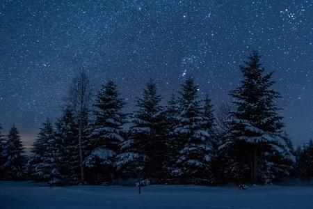 dark sky full of shiny stars in carpathian mountains in winter forest at night Фото со стока - 117953396