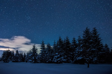 starry dark sky and spruces in carpathian mountains at night in winter Imagens