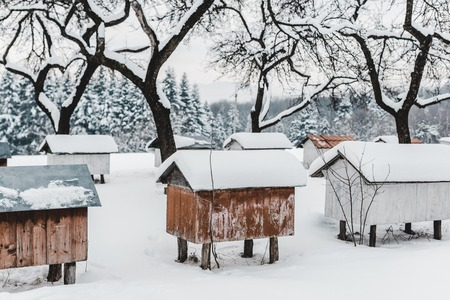 wooden beehives covered with snow among trees
