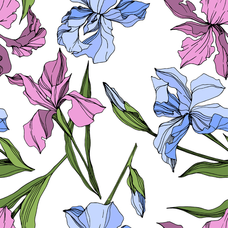 Vector Pink and blue iris floral botanical flower. Wild spring leaf wildflower isolated. Engraved ink art. Seamless background pattern. Fabric wallpaper print texture.