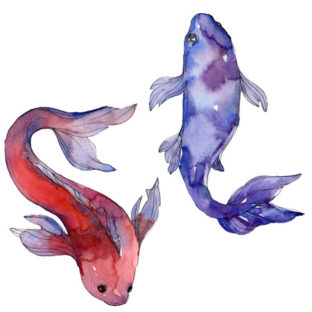 Aquatic underwater colorful tropical fish set. Red sea and exotic fishes inside: Goldfish. Watercolor background set. Watercolour drawing fashion aquarelle. Isolated goldfish illustration element. Stock Illustration - 117953777