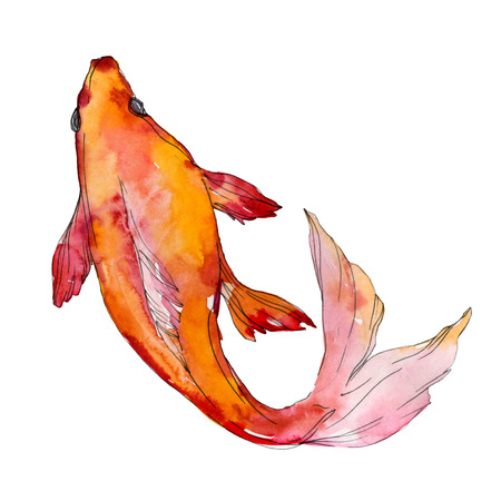 Aquatic underwater colorful tropical fish set. Red sea and exotic fishes inside: Goldfish. Watercolor background set. Watercolour drawing fashion aquarelle. Isolated goldfish illustration element. Stock Illustration - 118133866