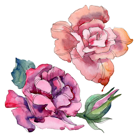 Pink and purple rose floral botanical flowers. Wild spring leaf wildflower isolated. Watercolor background illustration set. Watercolour drawing fashion aquarelle. Isolated rose illustration element.