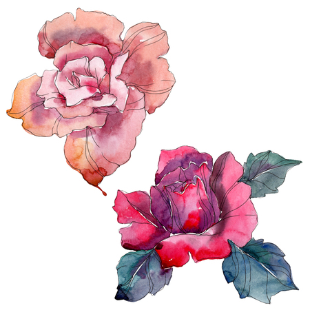 Pink and red rose floral botanical flowers. Wild spring leaf wildflower isolated. Watercolor background illustration set. Watercolour drawing fashion aquarelle. Isolated rose illustration element. Stock Photo
