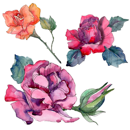 Red orange and rurple rose floral botanical flowers. Wild spring leaf isolated. Watercolor background illustration set. Watercolour drawing fashion aquarelle. Isolated rose illustration element. 写真素材