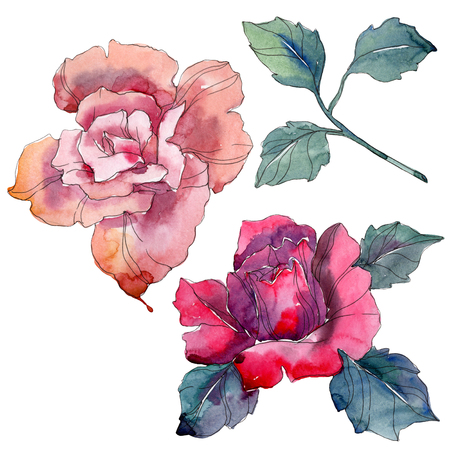 Pink and red rose floral botanical flowers. Wild spring leaf wildflower isolated. Watercolor background illustration set. Watercolour drawing fashion aquarelle. Isolated rose illustration element. Imagens