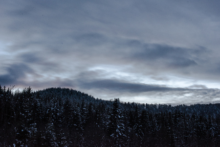landscape of carpathian mountains covered with snow with cloudy sky and trees in evening Imagens