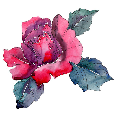 Red rose floral botanical flower. Wild spring leaf wildflower isolated. Watercolor background illustration set. Watercolour drawing fashion aquarelle isolated.