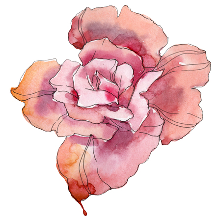 Pink rose floral botanical flower. Wild spring leaf wildflower isolated. Watercolor background illustration set. Watercolour drawing fashion aquarelle. Isolated rose illustration element. 写真素材
