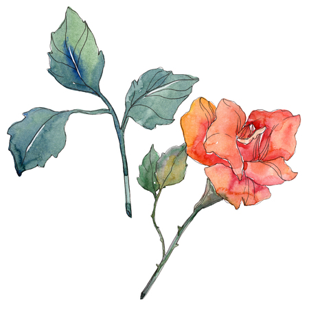 Red orange rose floral botanical flower. Wild spring leaf wildflower isolated. Watercolor background illustration set. Watercolour drawing fashion aquarelle. Isolated rose illustration element. 写真素材