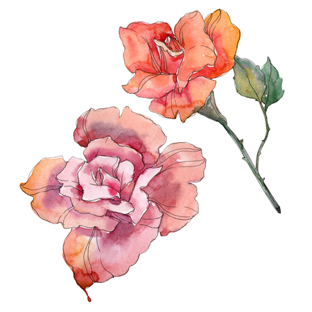 Red orange and pink rose floral botanical flowers. Wild spring leaf wildflower isolated. Watercolor background set. Watercolour drawing fashion aquarelle. Isolated rose illustration element.