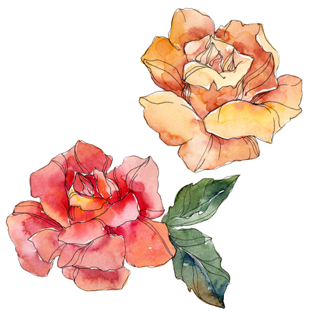 Orange and red Rose floral botanical flower. Wild spring leaf wildflower isolated. Watercolor background illustration set. Watercolour drawing fashion aquarelle. Isolated rose illustration element.