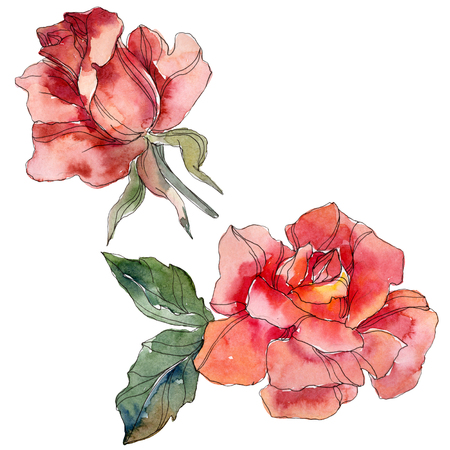 Red Rose floral botanical flower. Wild spring leaf wildflower isolated. Watercolor background illustration set. Watercolour drawing fashion aquarelle. Isolated rose illustration element. Stock Photo