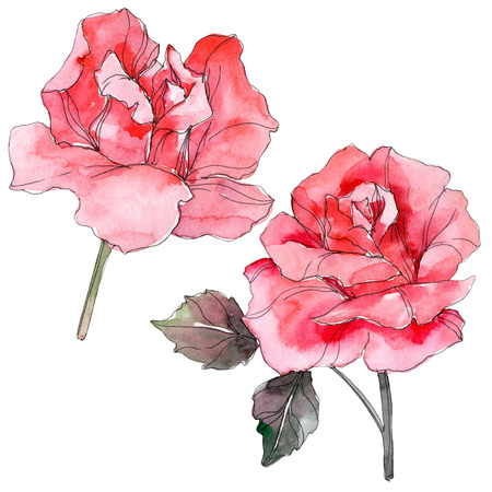 Pink rose floral botanical flower. Wild spring leaf wildflower isolated. Watercolor background illustration set. Watercolour drawing fashion aquarelle isolated. Isolated rosa illustration element.