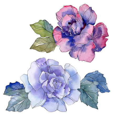 Blue and purple rose floral botanical flower. Wild spring leaf wildflower isolated. Watercolor background illustration set. Watercolour drawing fashion aquarelle. Isolated rose illustration element.