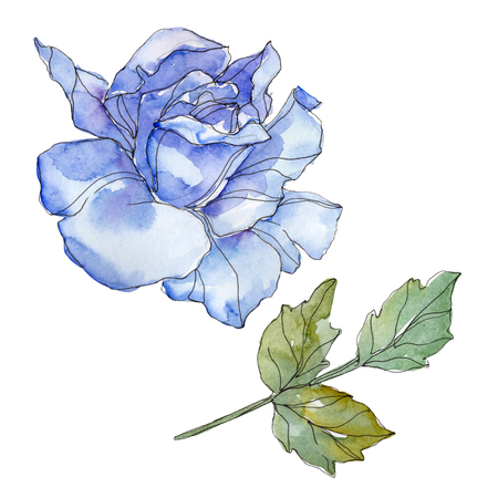 Blue rose floral botanical flower. Wild spring leaf wildflower isolated. Watercolor background illustration set. Watercolour drawing fashion aquarelle. Isolated rose illustration element.