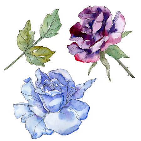 Blue and purple rose floral botanical flower. Wild spring leaf wildflower isolated. Watercolor background illustration set. Watercolour drawing fashion aquarelle. Isolated rose illustration element. 写真素材 - 117954276
