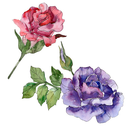 Red and purple rose floral botanical flowers. Wild spring leaf wildflower isolated. Watercolor background illustration set. Watercolour drawing fashion aquarelle. Isolated rose illustration element. Stock Photo
