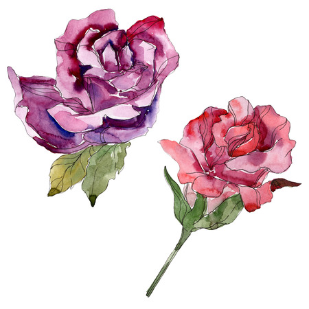 Red and purple rose floral botanical flowers. Wild spring leaf wildflower isolated. Watercolor background illustration set. Watercolour drawing fashion aquarelle. Isolated rose illustration element. Imagens