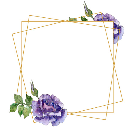 Violet rose floral botanical flowers. Wild spring leaf wildflower isolated. Watercolor background illustration set. Watercolour drawing fashion aquarelle. Frame border ornament square.
