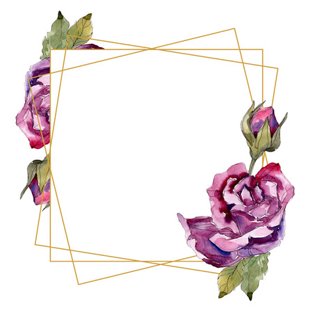 Purple rose floral botanical flowers. Wild spring leaf wildflower isolated. Watercolor background illustration set. Watercolour drawing fashion aquarelle. Frame border ornament square.