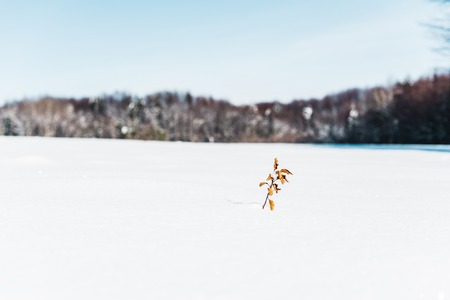 selective focus of small dry plant with leaves in snow
