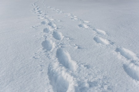 footprints on white clear snow with copy space 版權商用圖片
