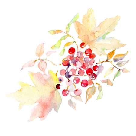 Bouquet with rowanberry floral botanical leaves. Wild spring leaf isolated. Watercolor background set. Watercolour drawing fashion aquarelle. Isolated bouquet illustration element.